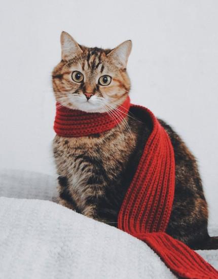 cat-5767334_1920