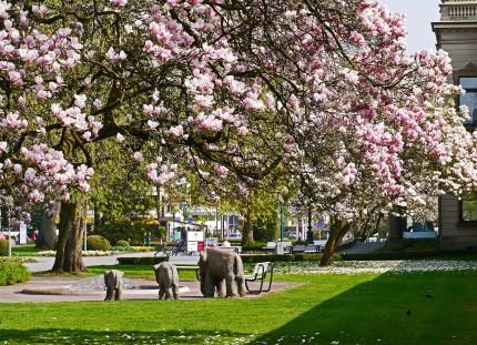 magnolia-blossom-1311775_1920